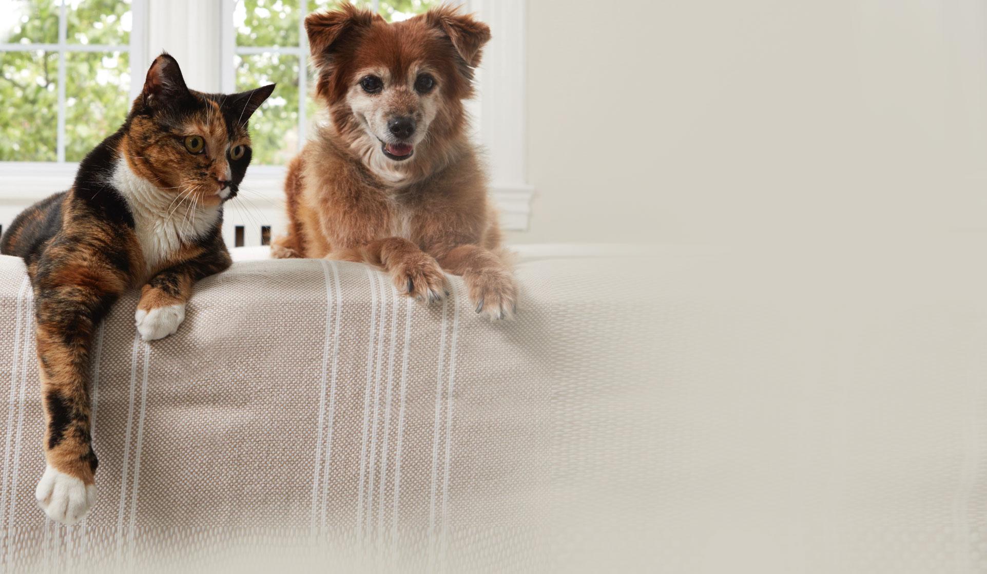 Hund und Katze auf dem Sofa