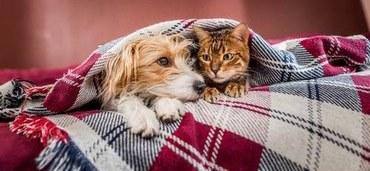 Hund und Katze ruhen einträchtig unter einer Decke