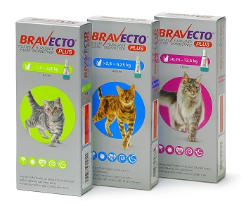 Bravecto PLUS für Katzen